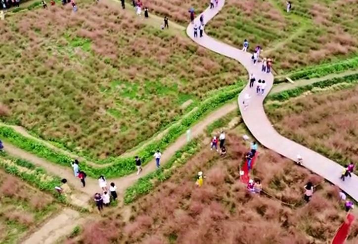 【視頻】航拍廣東英西峰林 尋美秋天的粉色童話