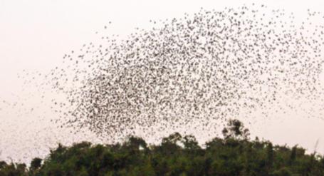 萬鳥同宿南丹山 村民發現新小鳥天堂