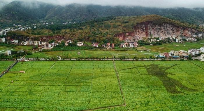 航拍廣東鬱南:蘭寨古村春色美