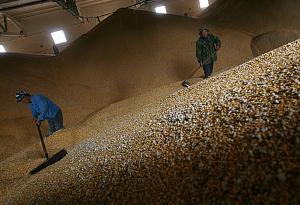專家:用科技創新推動糧食産業高質量發展