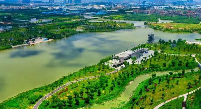 航拍鏡頭下的廣東濕地 綠意盎然美如畫