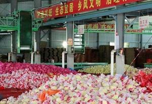 """""""粵來粵好""""看梅州:從一顆蜜柚看農業轉型發展之路"""