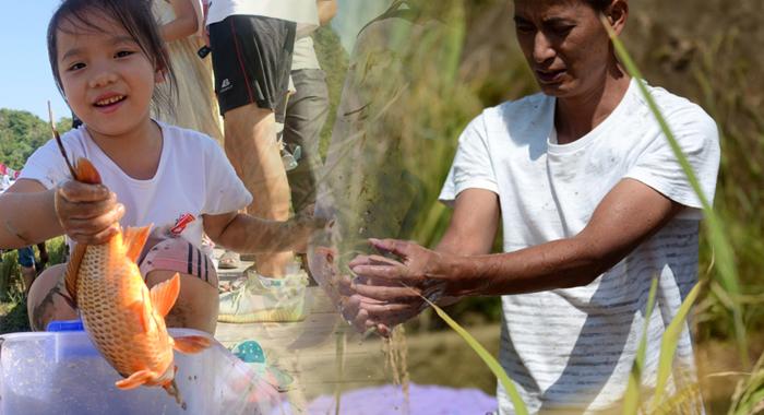豐收的喜悅——廣東各地喜迎中國農民豐收節