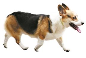 違法養犬或被視為失信