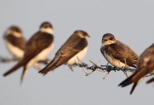 你了解這些關于鳥類羽毛的知識嗎?